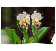 'picture perfect' Orchid 11 Poster