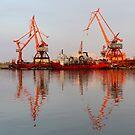 Cranes by Kasia Nowak