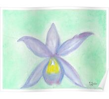 white orchid -oilpastels Poster