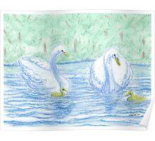 swans on lake -oilpastels Poster