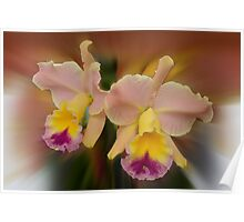 'picture perfect' Orchid 12 Poster