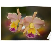 'picture perfect' Orchid 13 Poster