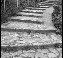 Stone Path by Melodie G