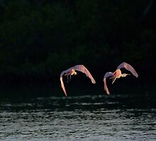 we are out of here ! by kathy s gillentine