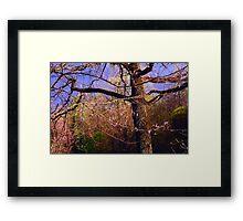 Time of Freshness. Sakura Blossoming  Framed Print