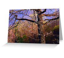 Time of Freshness. Sakura Blossoming  Greeting Card