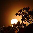 75 Watt Sunrise by A L G O