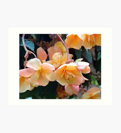 Begonia Cluster Art Print