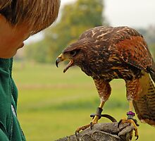 Harris Hawk & Falconer by Angus Russell