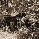 Abandoned Hunting Camp by linmarie