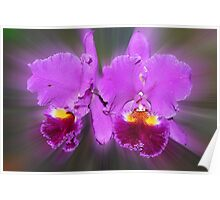 'picture perfect' Orchid 17 Poster