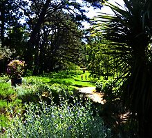 Beautiful Abbotsbury Gardens, Dorset UK by lynn carter