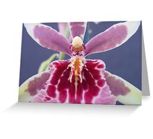 Alcra Sunday Best 'Muffin' AM/AOS Greeting Card