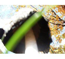 Underbelly of a Mushroom Cap Photographic Print