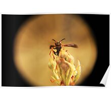 Wasp and Flower Bud Macro Poster