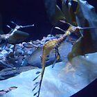 Sea Dragon by Felicia722
