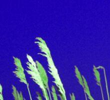Green Sea Grass Sticker