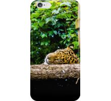 Sleeping Leopard  iPhone Case/Skin