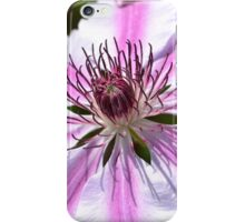 Pink Striped Nelly Moser Clematis iPhone Case/Skin