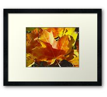 Mystery of the changing leaves Framed Print