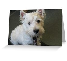 Spencer the Westie Greeting Card