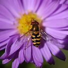 Shiny Bee on Flower by LOJOHA