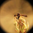 Wasp and Flower Bud Macro II by MBWright88
