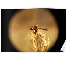 Wasp and Flower Bud Macro II Poster