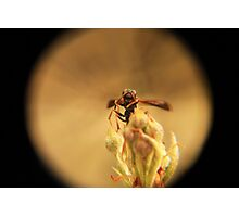 Wasp and Flower Bud Macro II Photographic Print