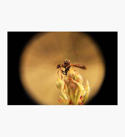 Wasp and Flower Bud Macro II Photographic Print