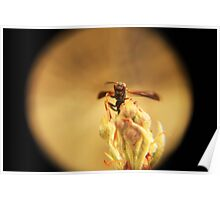 Wasp and Flower Bud Macro III Poster