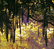 Hakone Gardens, Saratoga, California. A Plant with Pods. 2008 by Igor Pozdnyakov