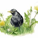 Blackbird with Dandelions by Maureen Sparling