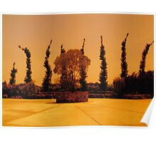 Cypress-like Trees in a Napa Winery, California 2008 Poster
