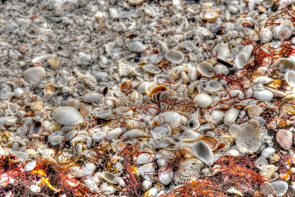 Blanket of Shells on Sanibel Island Beach in Florida by Jeremy Lavender Photography