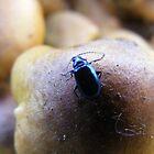 Beetle On Fungi by Emily Perry