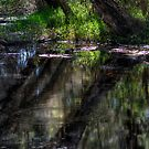 Reflections in the Dell.... by GerryMac