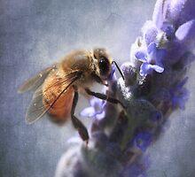 Lavander bee by Louise Docker