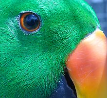 Bright Eyed Parrot by chijude
