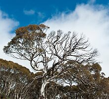My Perisher back country - 1 by pmacimagery