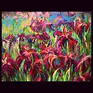 Iris Field by Cameron Hampton