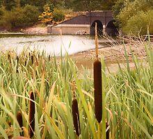 Blackbrook Reservoir by Wulfrunnut