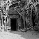 Roots and the Doorway by openyourap