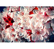 Hey, little Cherry Blossom Photographic Print