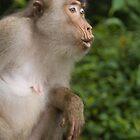 Monkey by krasser
