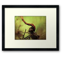 dragonfly world Framed Print