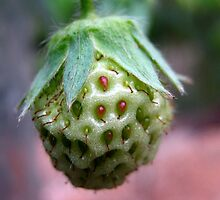 Unripe Strawberry by Vanessa Barklay