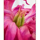 Peony Can Can Card by Leslie Nicole
