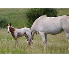 foal and her mum  Photographic Print