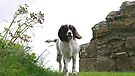 Teal at Norham Castle by Ryan Davison Crisp